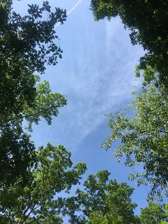 Looking up from a bench at summit of Brush Mountain