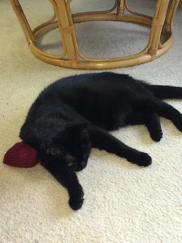 Fortune Cookie catnip toy