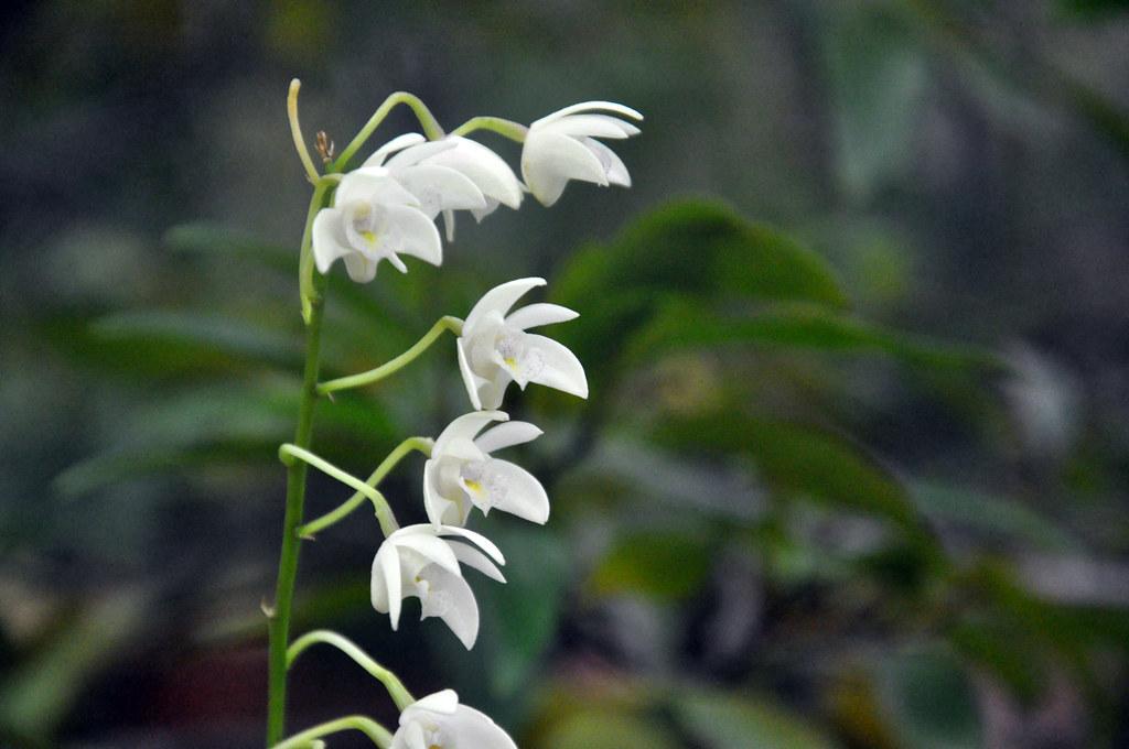 Ботанический сад DSC_0183