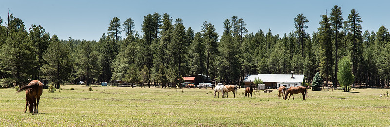 Horse Ranch, Clints Well Az