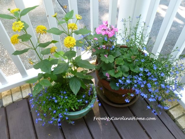 Early Morning June Garden ~ From My Carolina Home