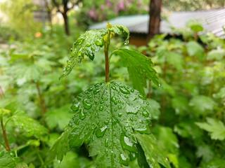 HTC 10 buske
