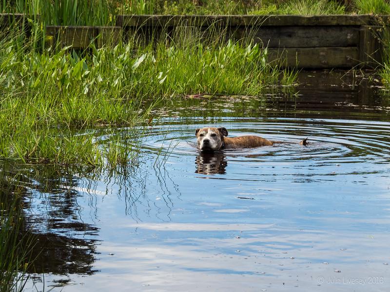 Jez in the pond
