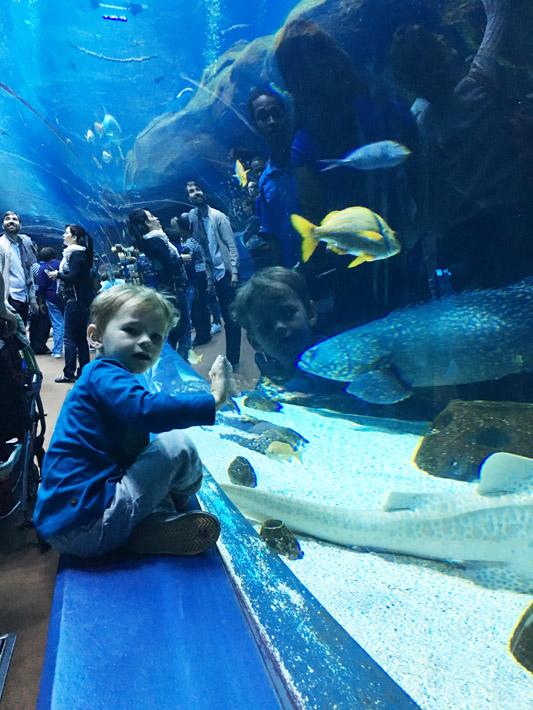 101615_aquarium18