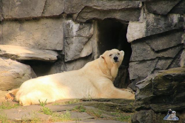 Tierpark Berlin 29.05.2016   0228