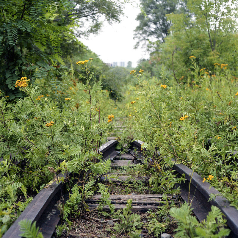 Weeds and Rails