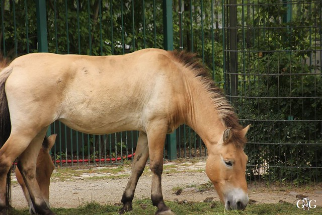 Sonntags-Besuch Zoo Berlin 03.07.201630
