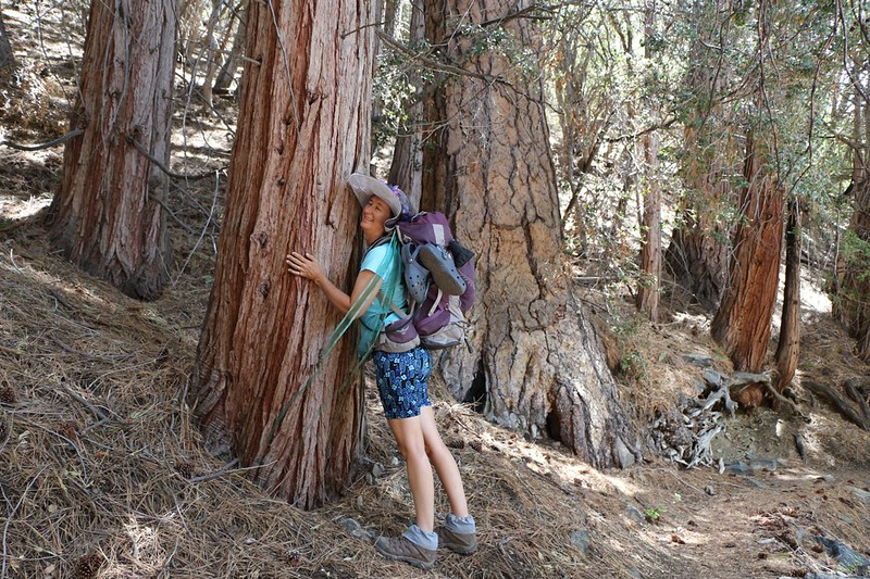 Vicki hugging a large Cedar near Cedar Spring (which was dry) on the Falls Creek Trail