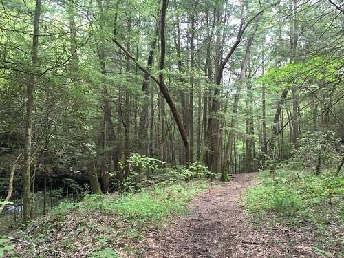 Clear Trail Path