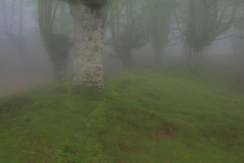 Parque Natural de #Gorbeia #Orozko #DePaseoConLarri #Flickr - -498