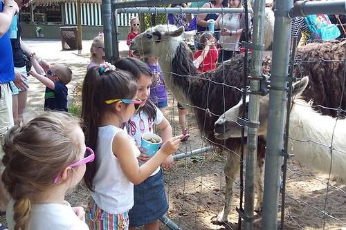 James's Farm Field Trip 2016