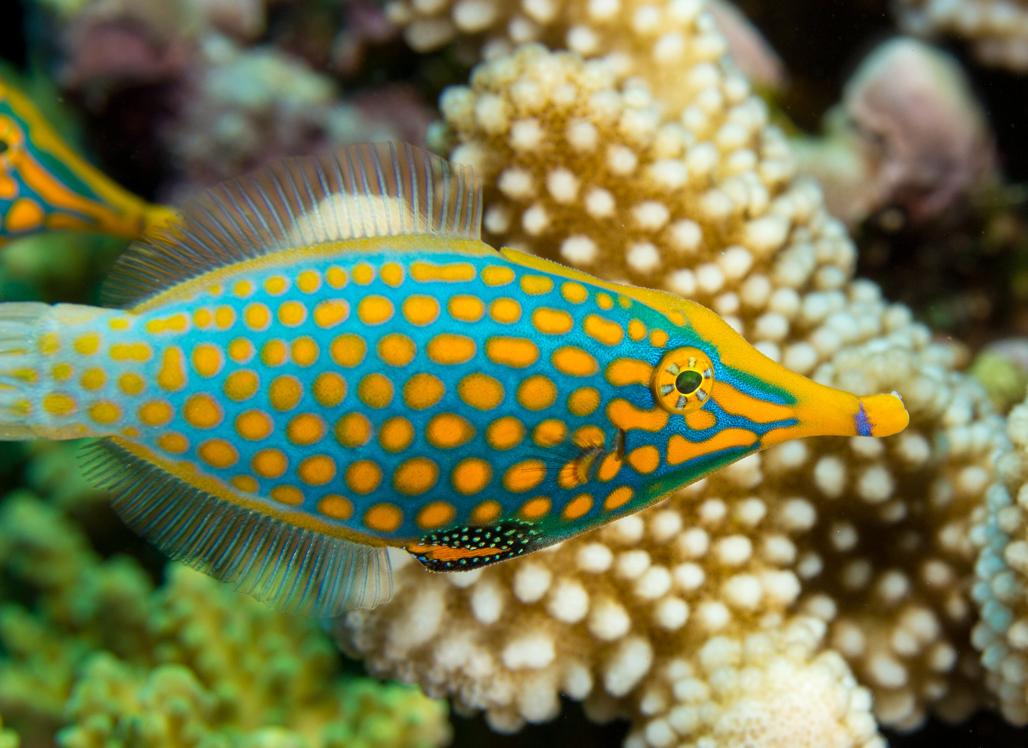 wow look at this fijian fish