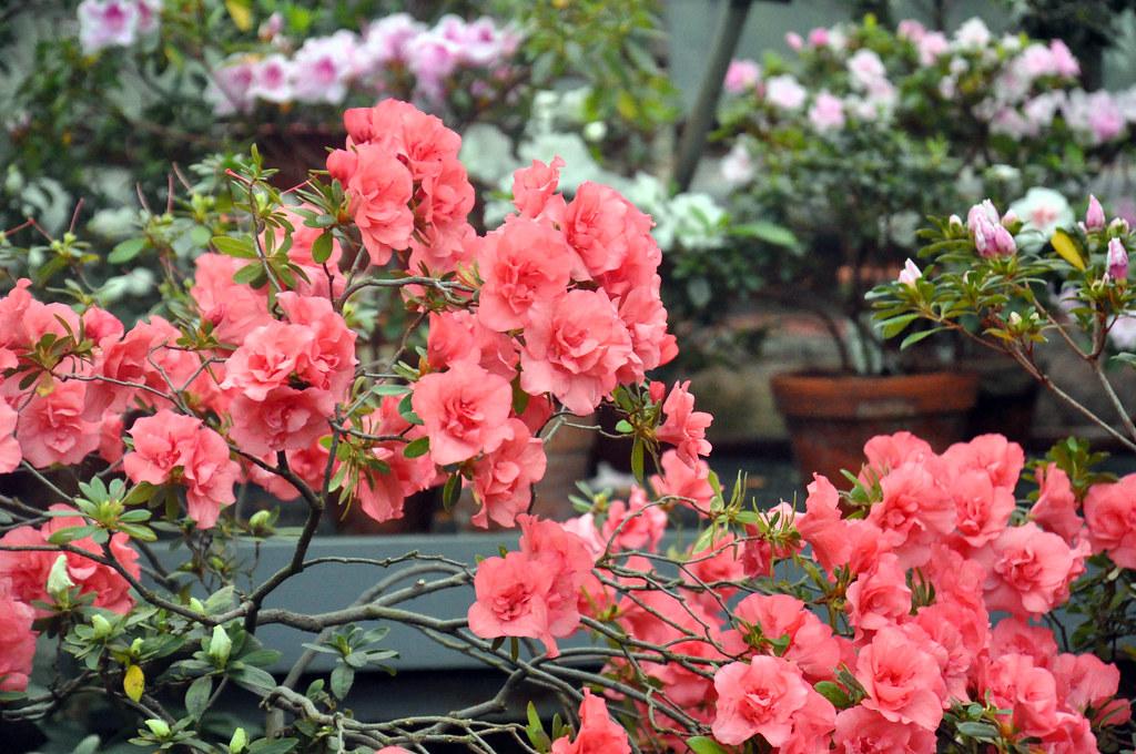 Ботанический сад DSC_0229
