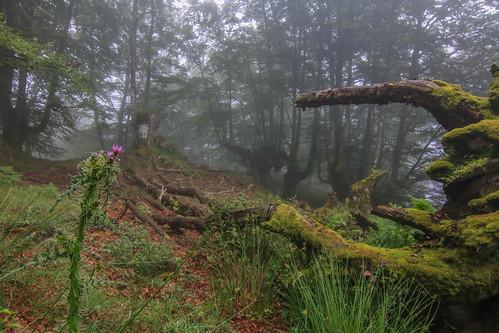 Parque Natural de #Gorbeia #Orozko #DePaseoConLarri #Flickr - -610