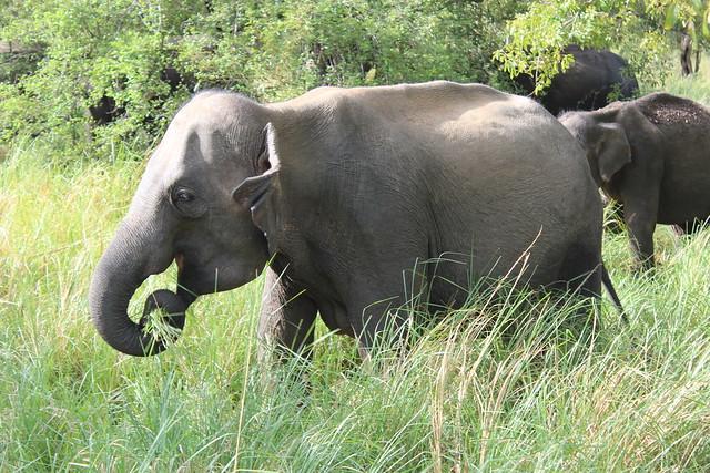 Minneriya, Sri Lanka
