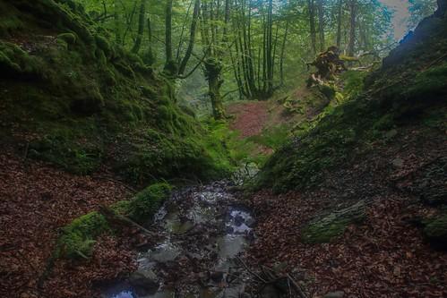 Parque Natural de #Gorbeia #DePaseoConLarri #Flickr - -876