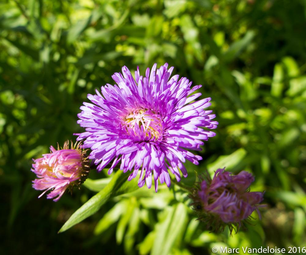 Sortie Picnic Chevtogne 03/07/16 - Photos 27893208990_273944121b_o