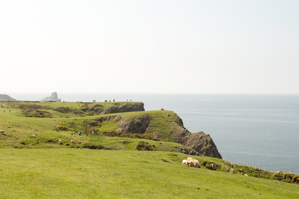 Rhossili Bay Cliffs 4