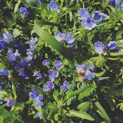 Het drukst bezochte deel van de tuin (de 586 mierennesten niet meegeteld). 💕