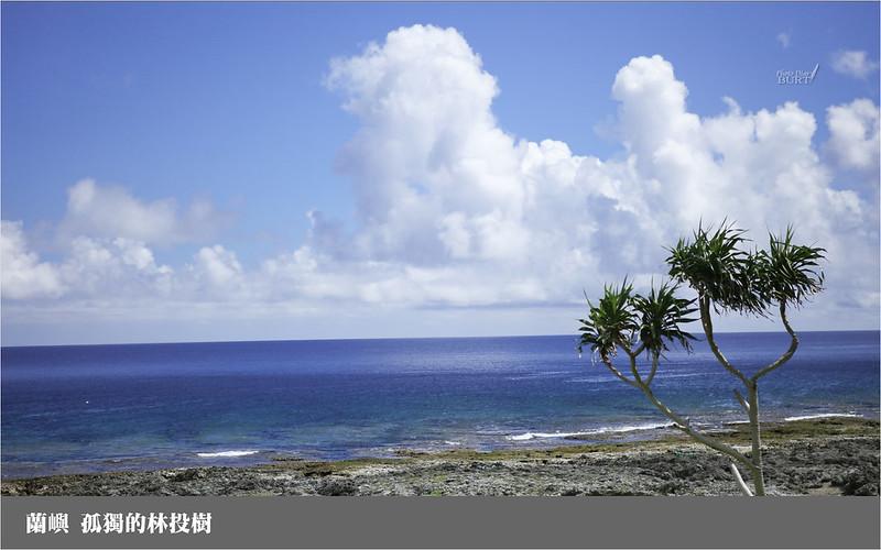 蘭嶼_孤獨的林投樹