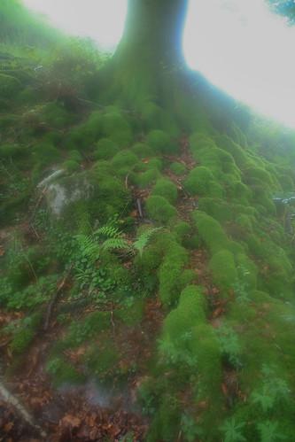 Parque Natural de #Gorbeia #Orozko #DePaseoConLarri #Flickr - -507