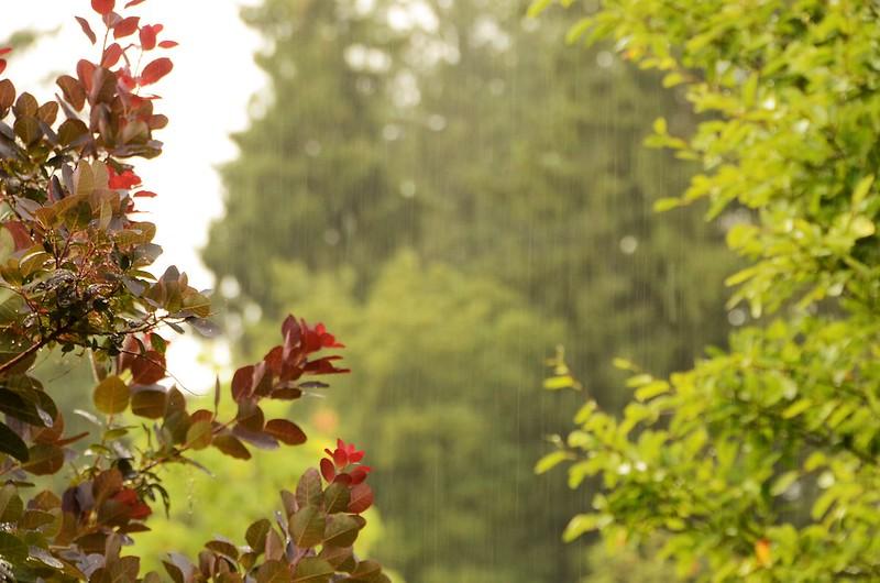 Rain in Back Garden 31.07 (1)