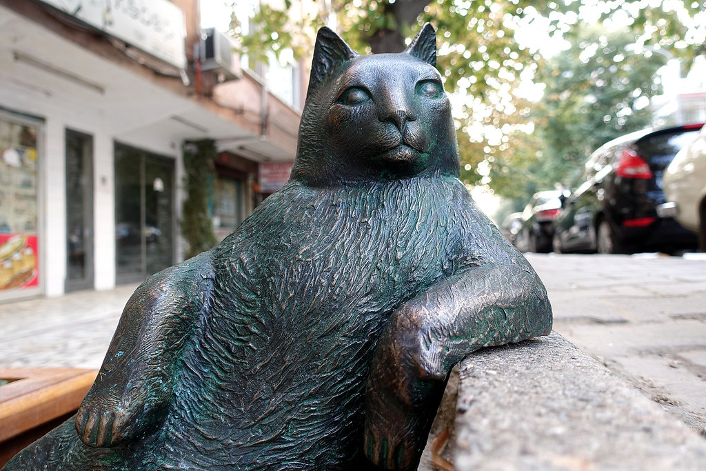 In Memory of Istanbul's Phenomenal Cat - Tombili