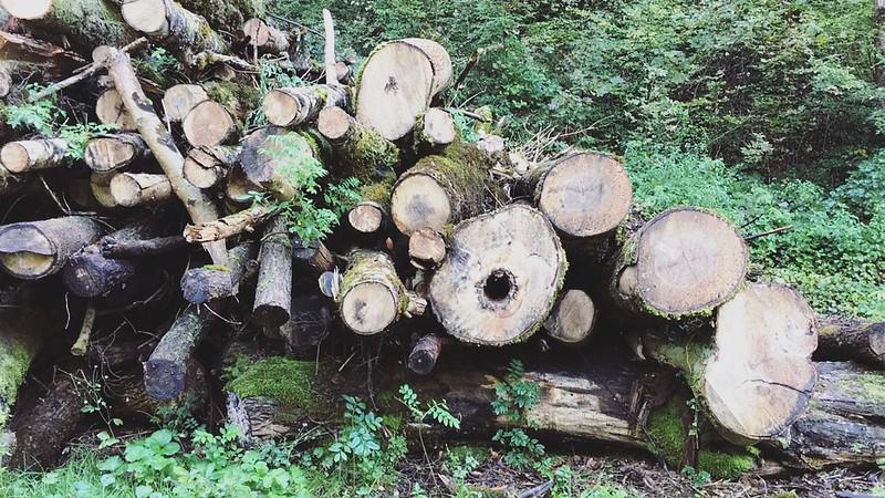 Forest in Wetzikon