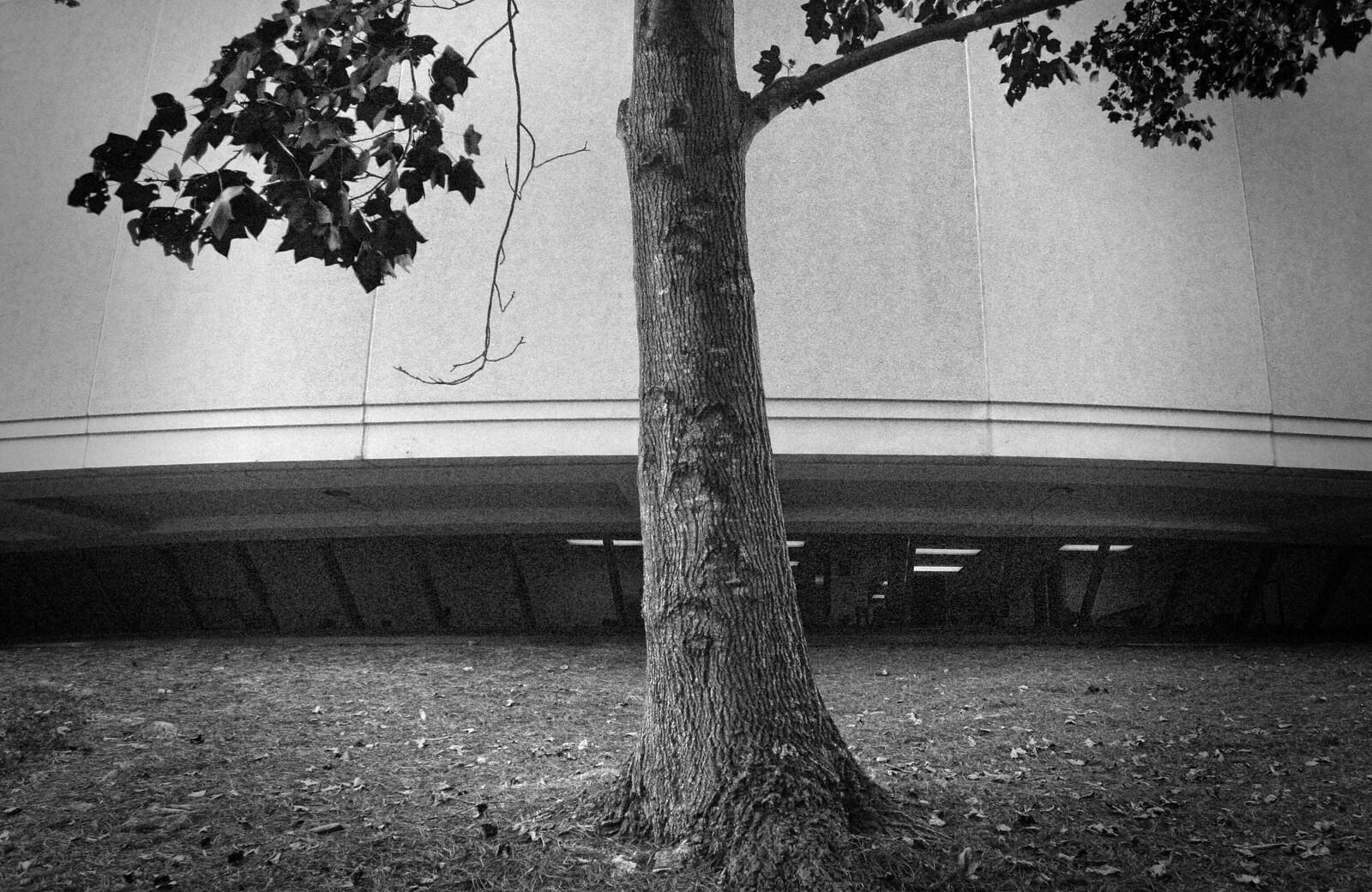 Tree, Carter Center, Atlanta, Oct 2014
