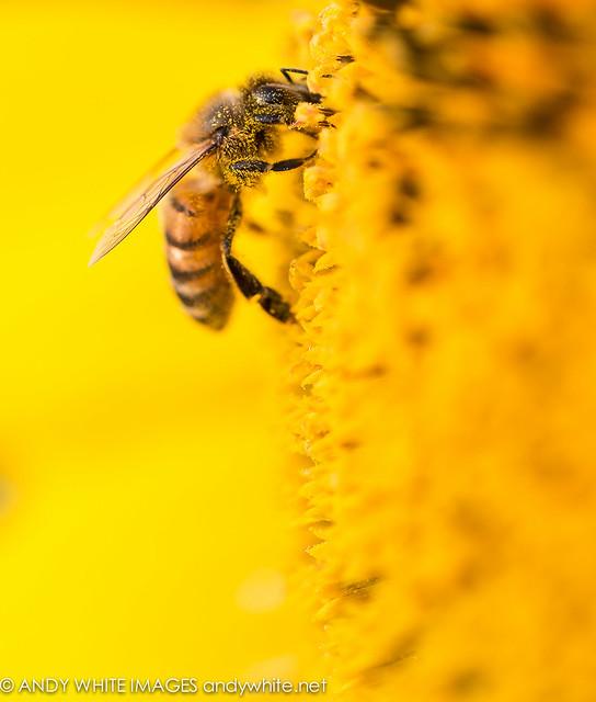 sunflowerfarm20160905-23