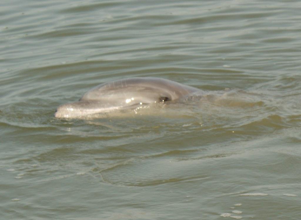 Delfines Puerto El Morro