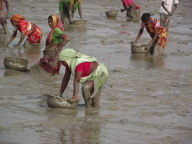 Mangrove seed plantation by community women. (Source: NEWS)