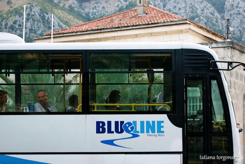 Автобус  Blue line в Которе