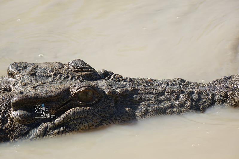 darwin tours quiet croc