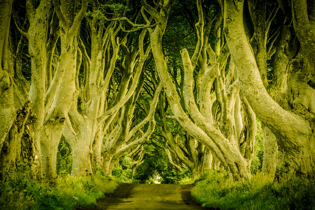The Dark Hedges (DSC8602)