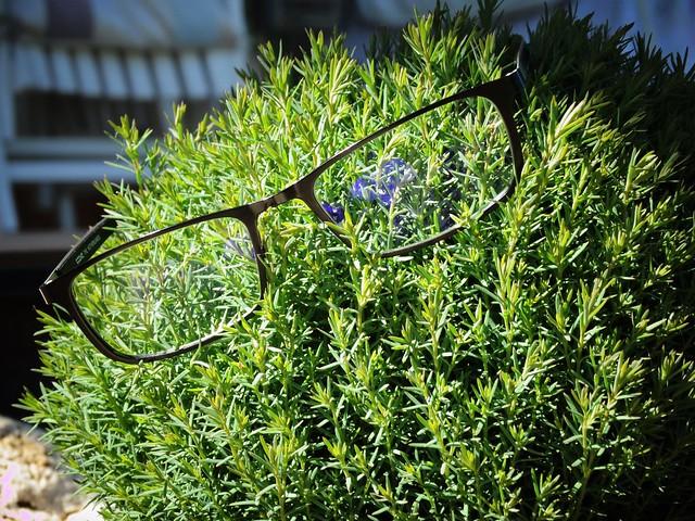Szemüveges növény