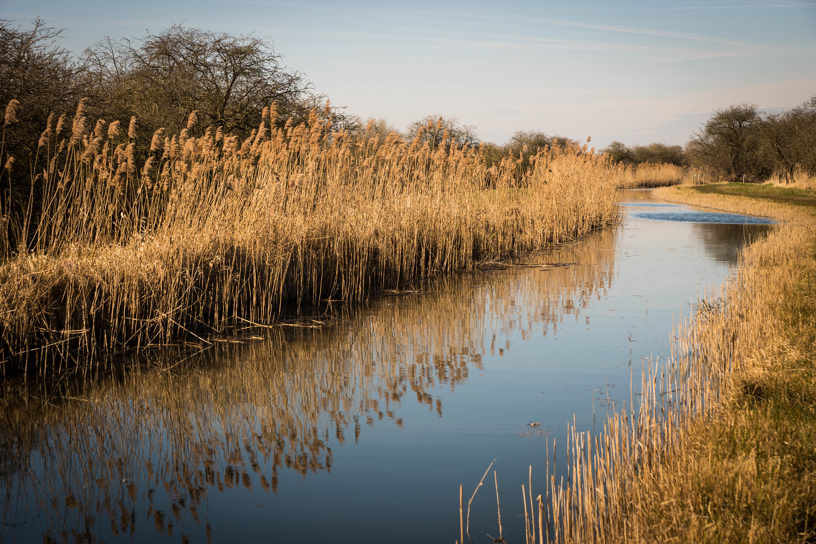 Wicken Fen - April 2016-7