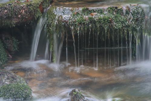 Parque Natural de #Gorbeia #DePaseoConLarri #Flickr - -915