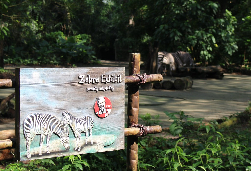 Kentucky Fried Zebra, Singapore Zoo