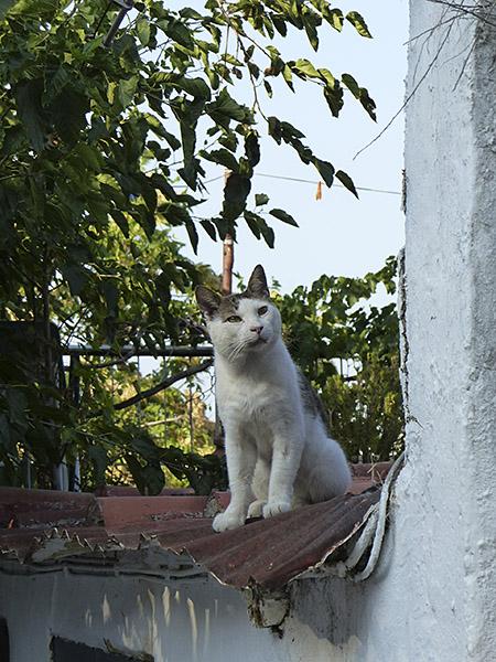le chat qui répond