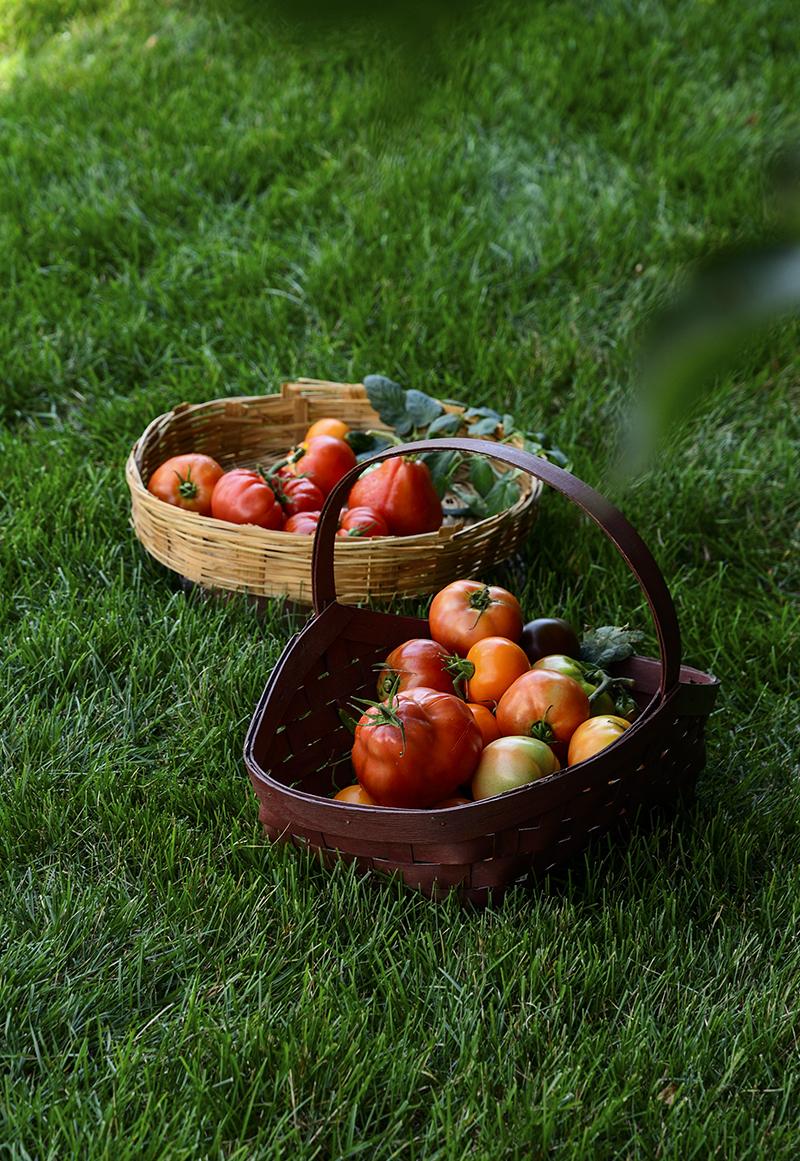 Tomatoesingrass-800PX-SimiJois-2016