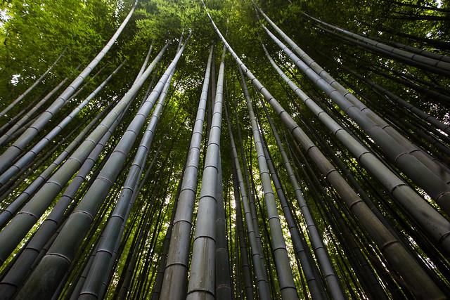 arashiyama bamboo grove 1