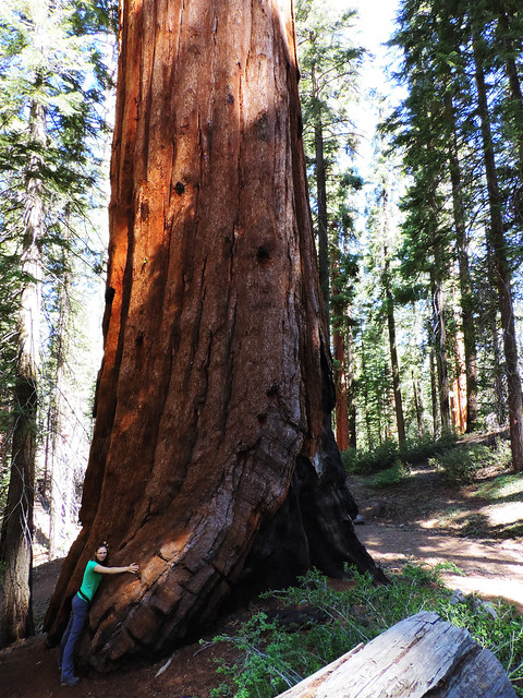 Sequoia National Forest, California, USA