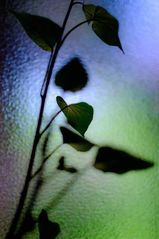 Shadow of leaves