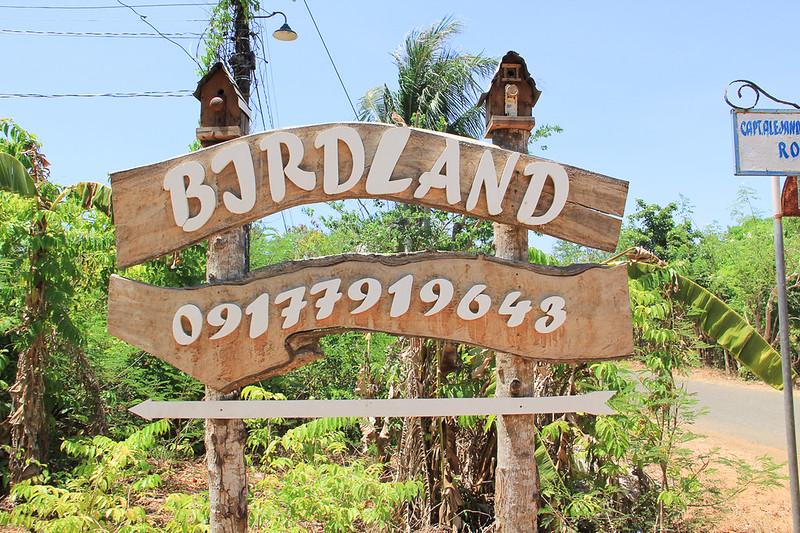 Birdland Bolinao_175