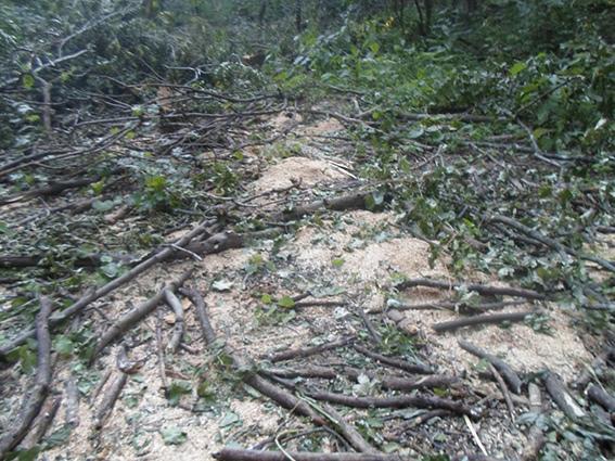 лес дровосеки