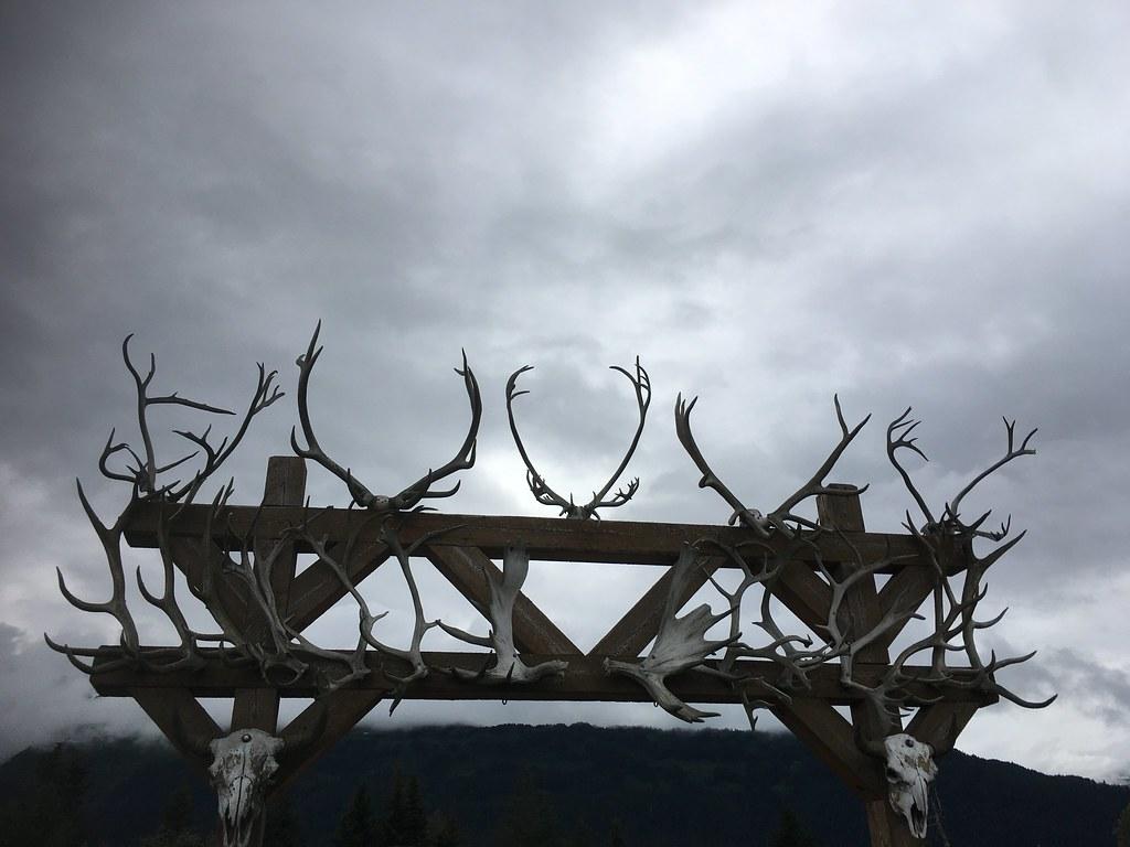 horns everywhere