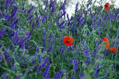 Charming flowers...