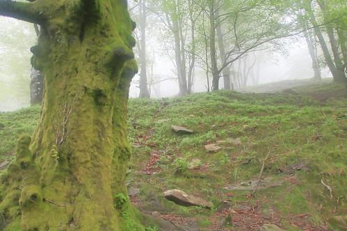 Parque Natural de #Gorbeia #Orozko #DePaseoConLarri #Flickr -193