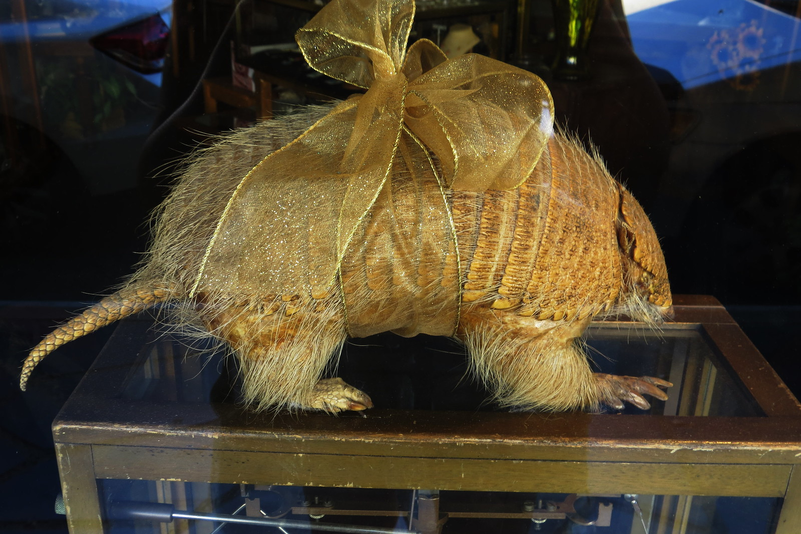 Armadillo, Mariposa, California